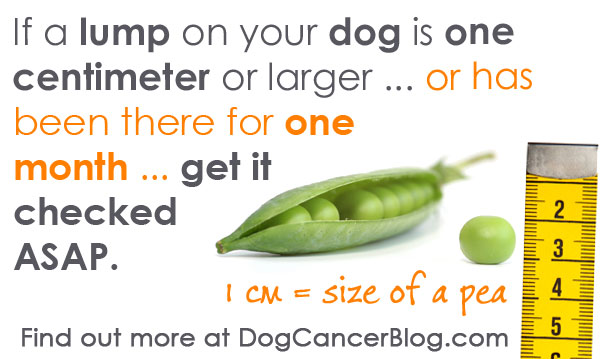 how to get a dog with cancer to eat